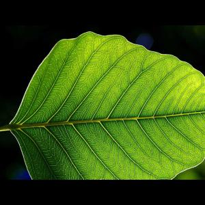 blad_leaf_kvadrat